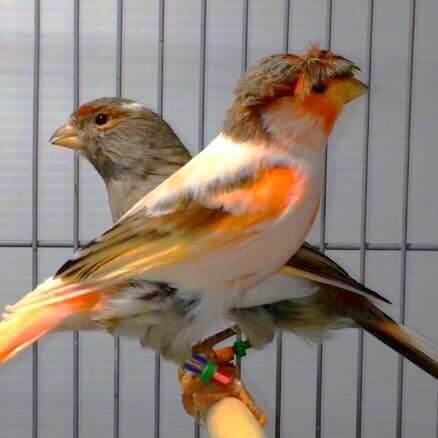 شرح المصطلحات العلمية للطيور